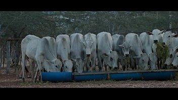 เอาในเลาจน์โค เย็ดให้วัวดู เย็ดโชว์วัว หนังเรทR18+ หนังอาร์บราซิล
