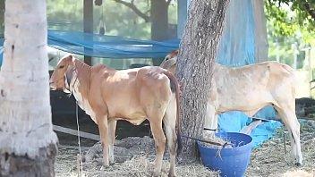 เสียงไทย เย็ดให้วัวดู เย็ดท่าหมา เย็ดตูดพระเอก เย็ดตูด